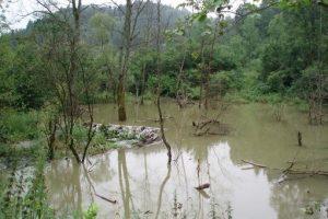 Woda z leśnego bajora lub stawu rzadko kiedy może być użyta do zrobienia mieszanki betonowej