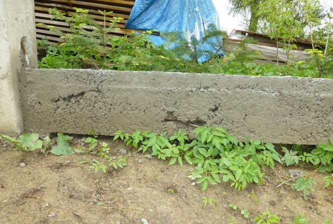 """Fot. 1 – W tej żelbetowej belce, wykonanej między słupkami ogrodzenia, """"raki"""" są tak duże, że w tych miejscach beton nie chroni prętów zbrojenia przed korozją"""